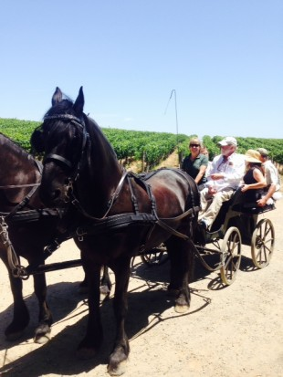Xen pics - Cabs and Carriages, carriage ride
